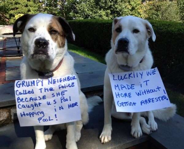 40 of the Most Hilarious Dog Shaming Photos Ever