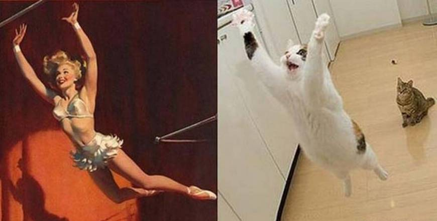 35 Cats Who Could Have Careers as Pin-Up Girls