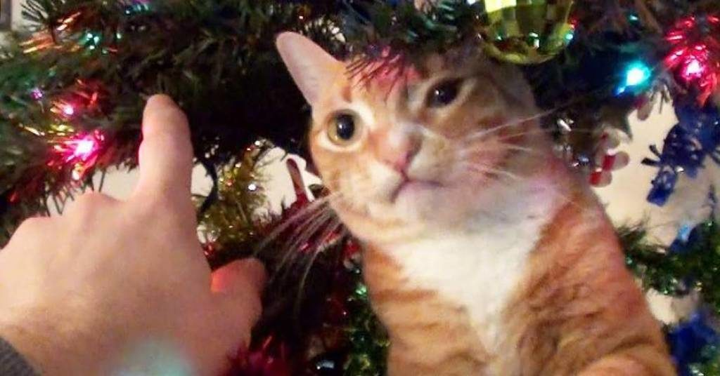 29 Cats Who've Had It With the Christmas Tree