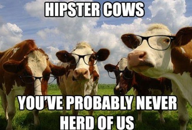 The Absolute Funniest Cow Puns