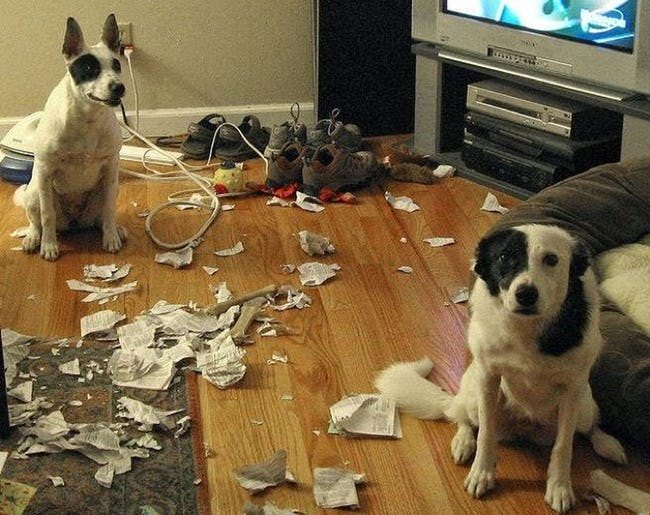 29 Guilty Dogs Who Were Totally Caught in the Act