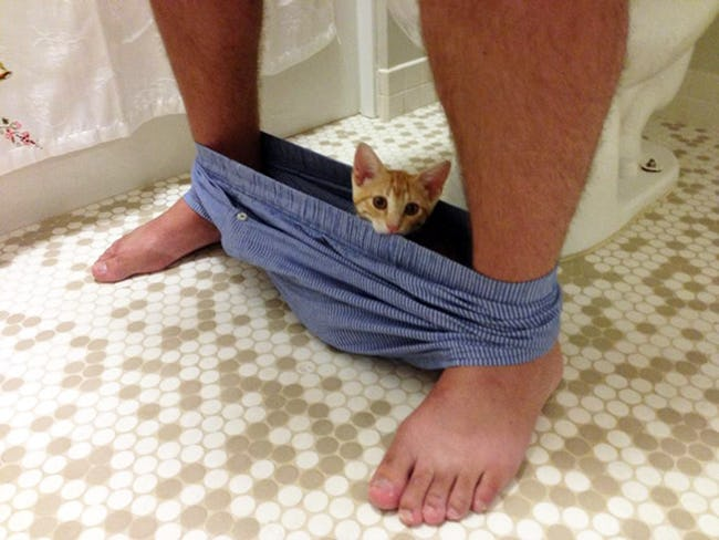Pets Who Have Never Heard of Privacy