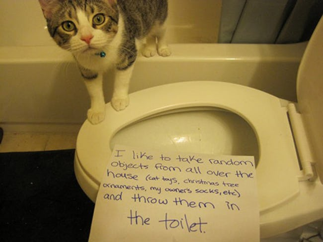 The Best Cat Shaming Pictures on the Internet