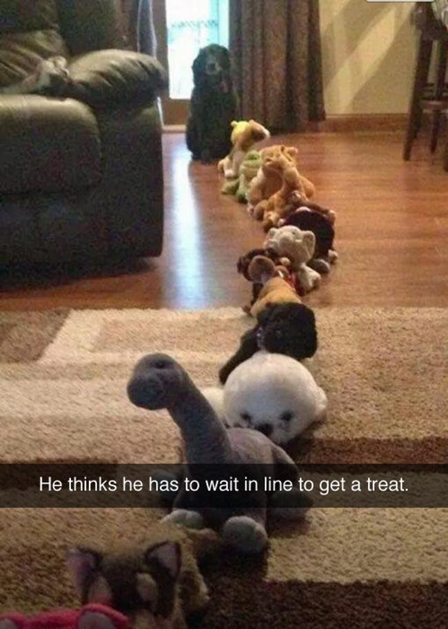 Snapchats from Your Dog