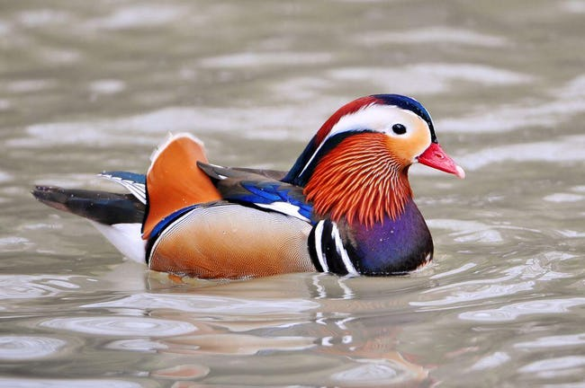 33 Colorful Animals Who Look Photoshopped