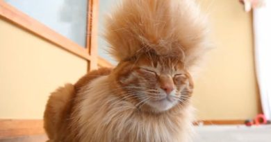 Cutest Half-Shaved Cats on the Internet