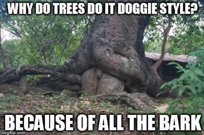 Funny Tree Puns That'll Leaf You in Awe