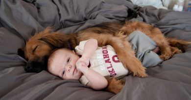 47 Dogs and Babies Who Are Adorable Best Friends
