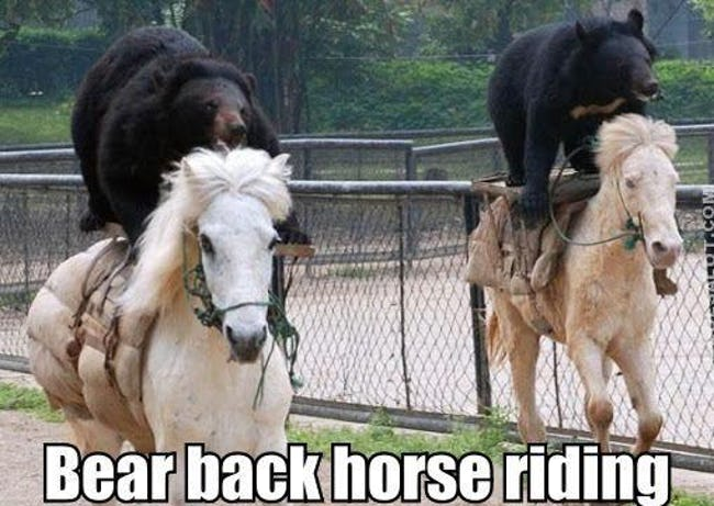 The Funniest Horse Puns in the Barn - ViraLuck