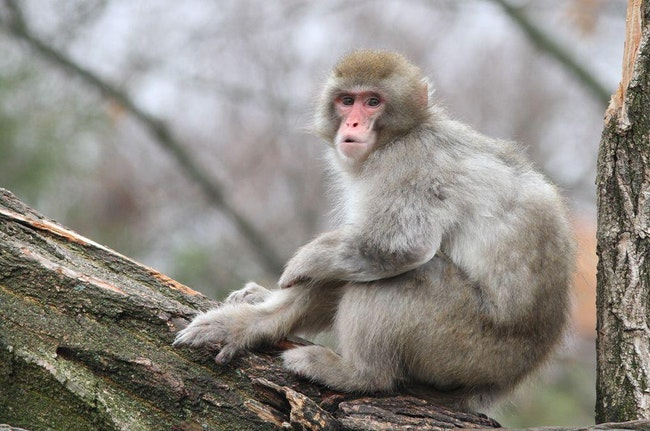 Here Are The Radioactive Animals Living In Fukushima