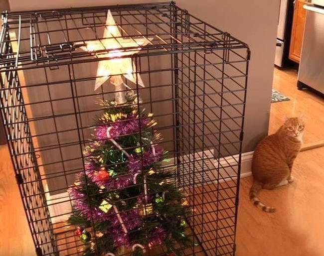 These People Figured Out Genius Hacks To Protect Their Christmas Trees From Pets