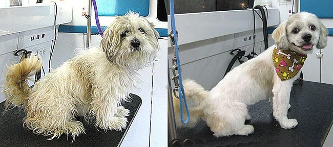 Dogs Who Got Their Hair Done: Before and After