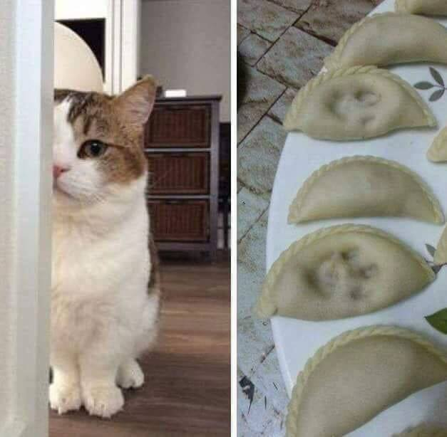 Funny pictures of the day for Tuesday, 12 March 2019