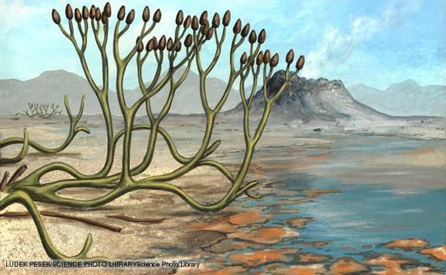 Earth's Big Five Mass Extinction Events
