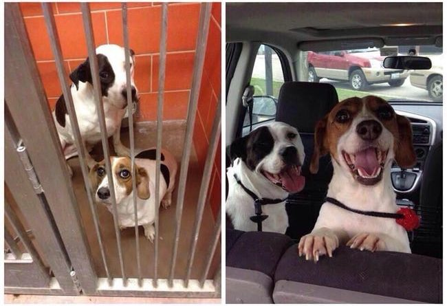 Adopted Dogs