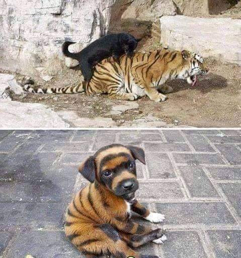 Funny pictures of the day for Sunday, 21 April 2019