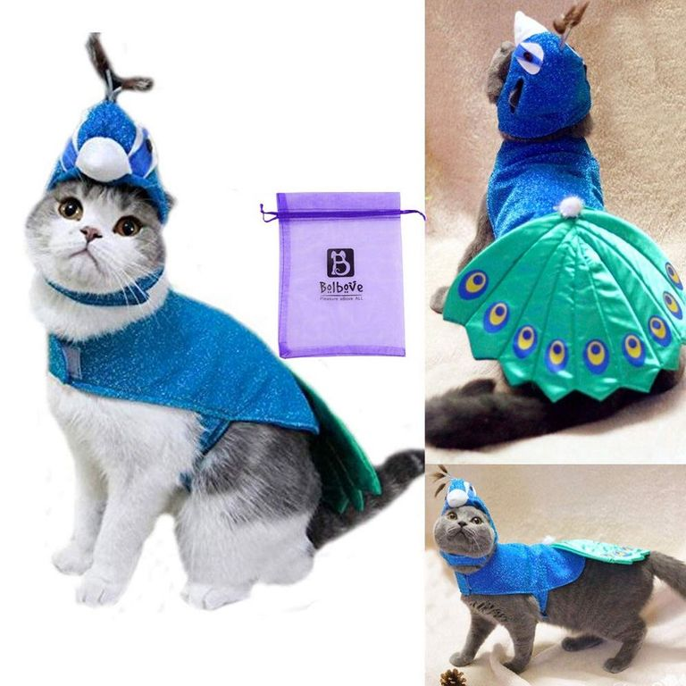 The 15 Best Cat Halloween Costumes